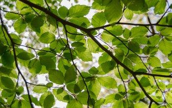 157 4k Ultra Hd Leaf Wallpapers Background Images