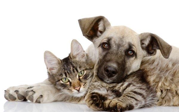 Animal Cat & Dog Dog Cat Friend HD Wallpaper | Background Image