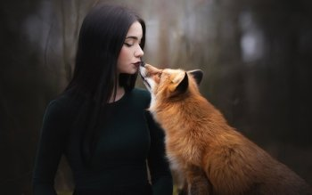 18 Black Fox Hd Wallpapers Background Images Wallpaper Abyss