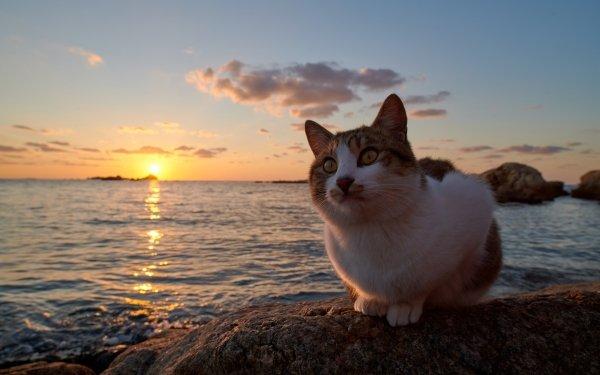 Animal Cat Cats Sunset Pet HD Wallpaper | Background Image