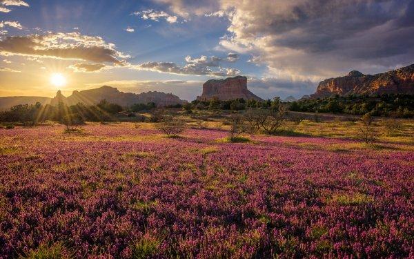 Earth Landscape Field Sun Mountain Rock Sedona HD Wallpaper | Background Image