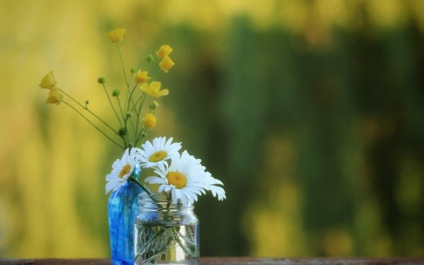 Man Made Flower Buttercup Chamomile Blur HD Wallpaper | Background Image