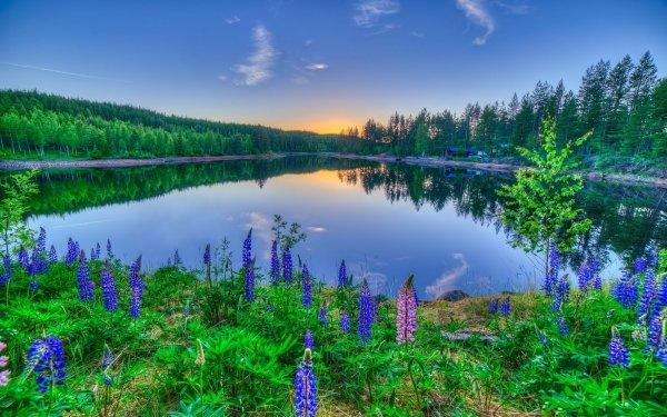 Earth Lake Lakes Sunset Flower Reflection Lupine HD Wallpaper   Background Image