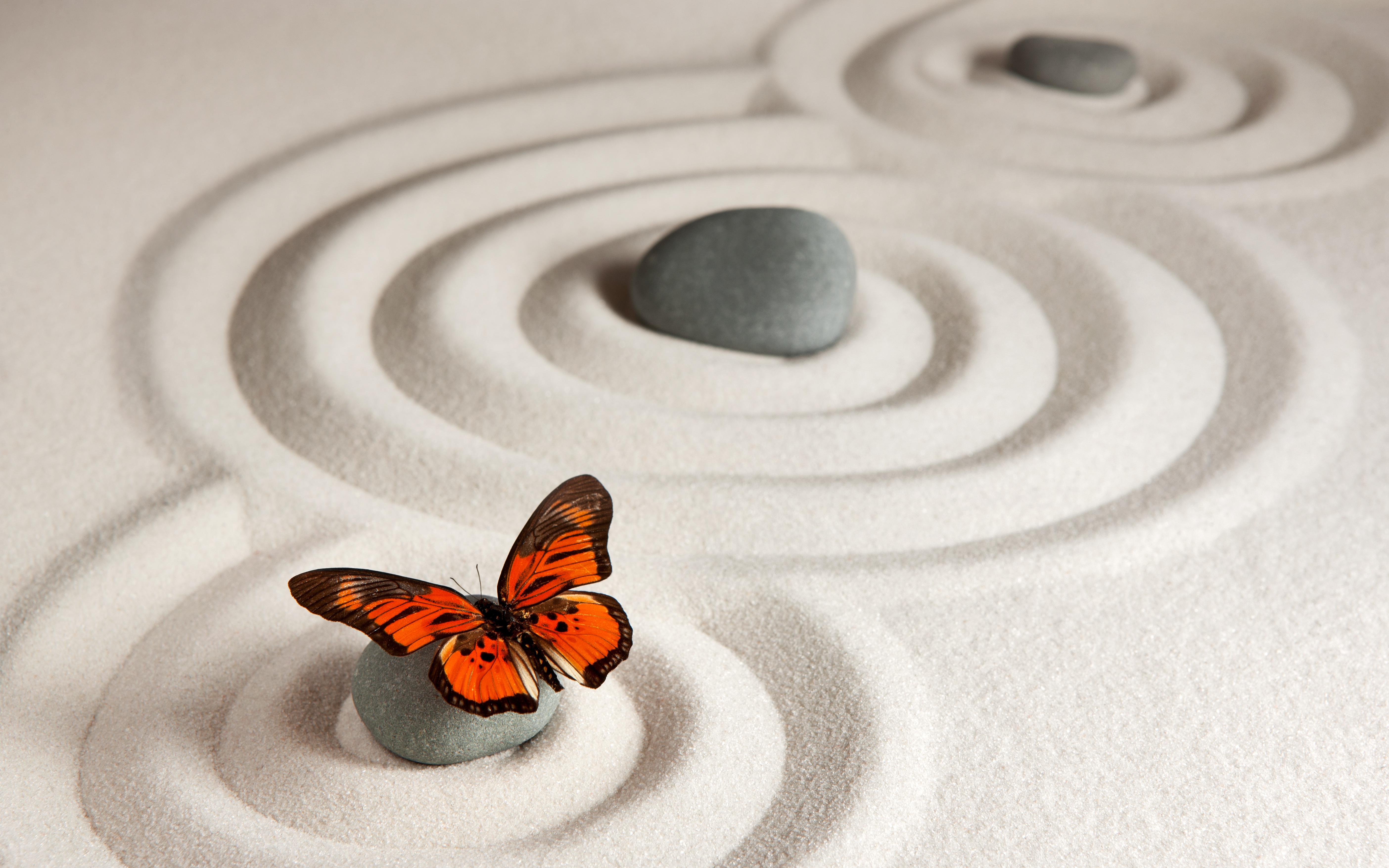 蝴蝶图片 4K高清壁纸 动物壁纸-第2张