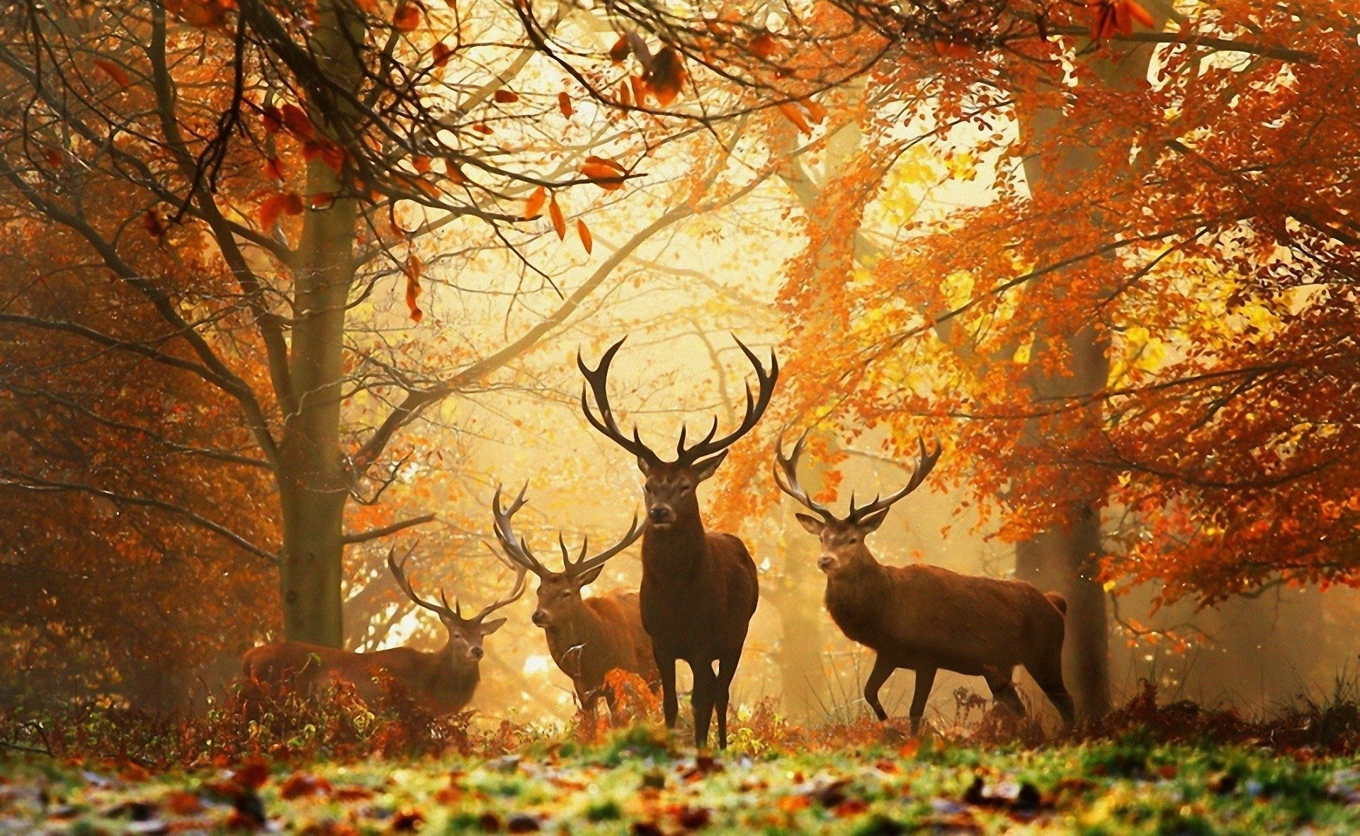 Best Wallpaper Forest Deer - thumb-1920-298534  Photograph_611537 .jpg