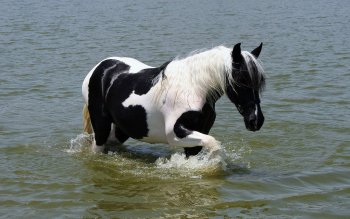 Animal - Horse Wallpapers and Backgrounds ID : 299604