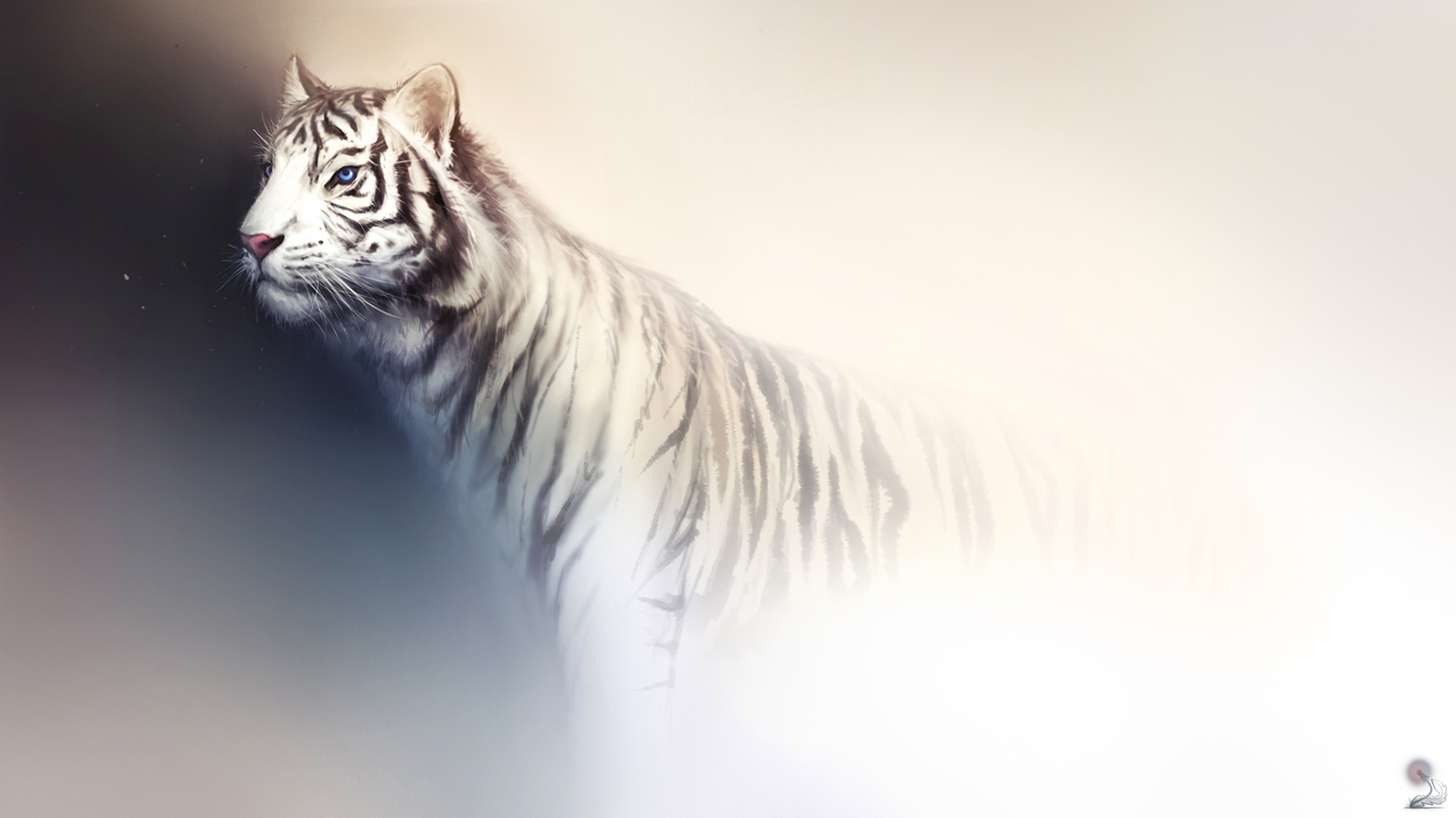 White Tiger Hd Wallpaper Background Image 1920x1080 Id 300666
