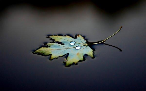 Earth Fall Water Floating Leaf Season HD Wallpaper | Background Image