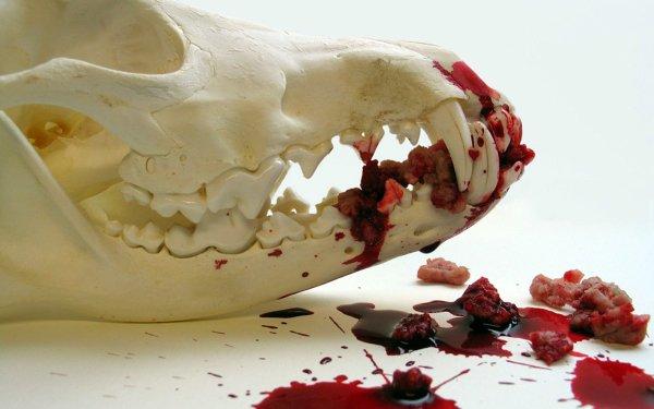 Oscuro Sangre Cráneos Oculto Horror Fondo de pantalla HD | Fondo de Escritorio