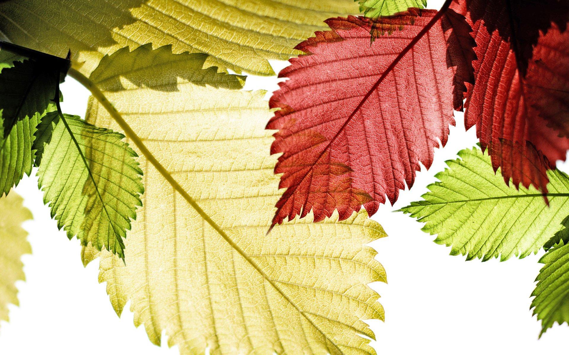 Earth - Fall  Leaf Close-Up Macro Season Wallpaper