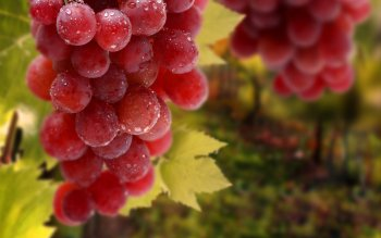 Food - Grapes Wallpapers and Backgrounds ID : 306556