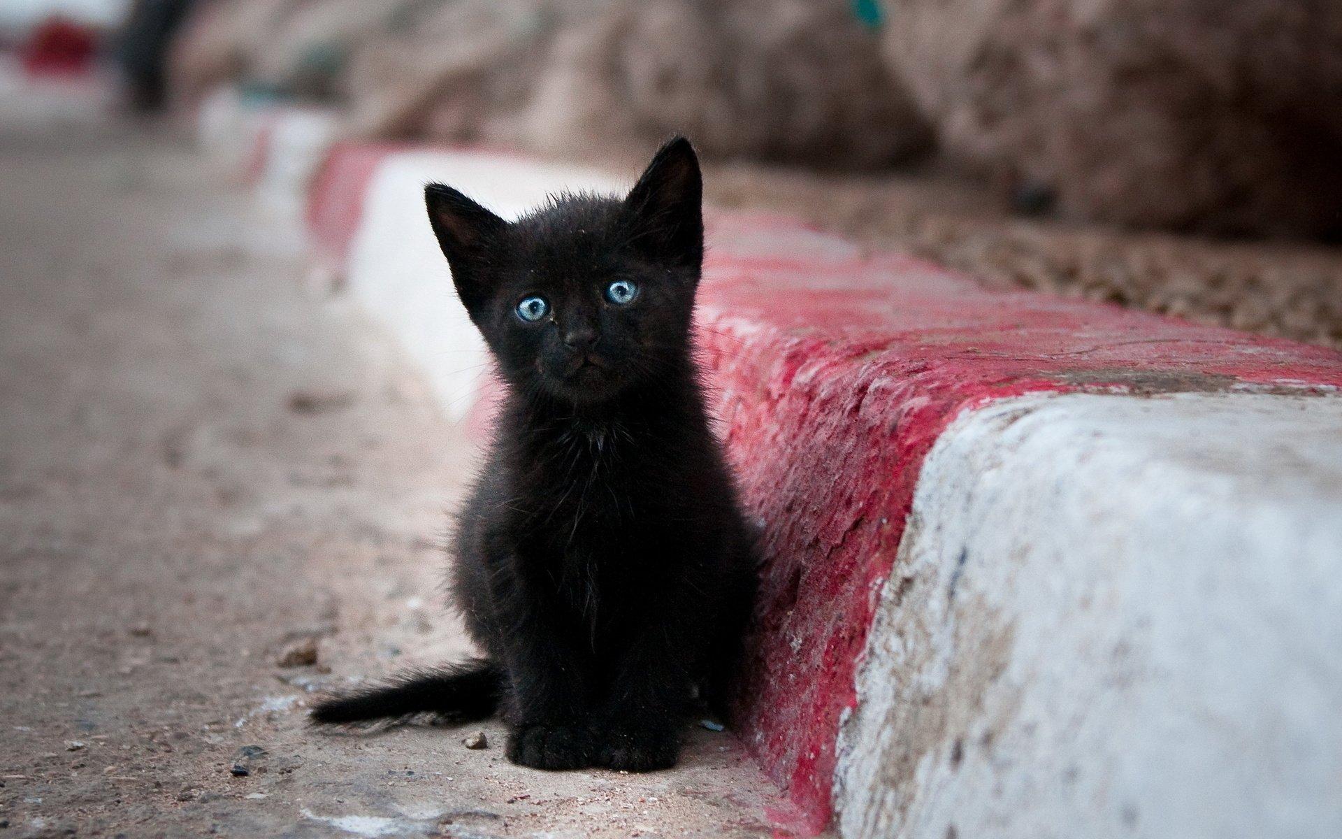 动物 - 猫  Kitten 可爱 Pet 壁纸