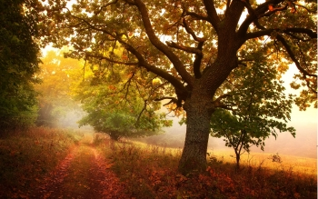 Earth - Autumn Wallpapers and Backgrounds ID : 310048