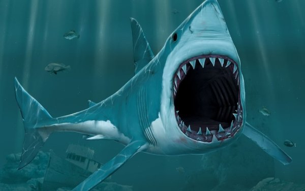 Animal Artistic Shark Fish 3D HD Wallpaper | Background Image