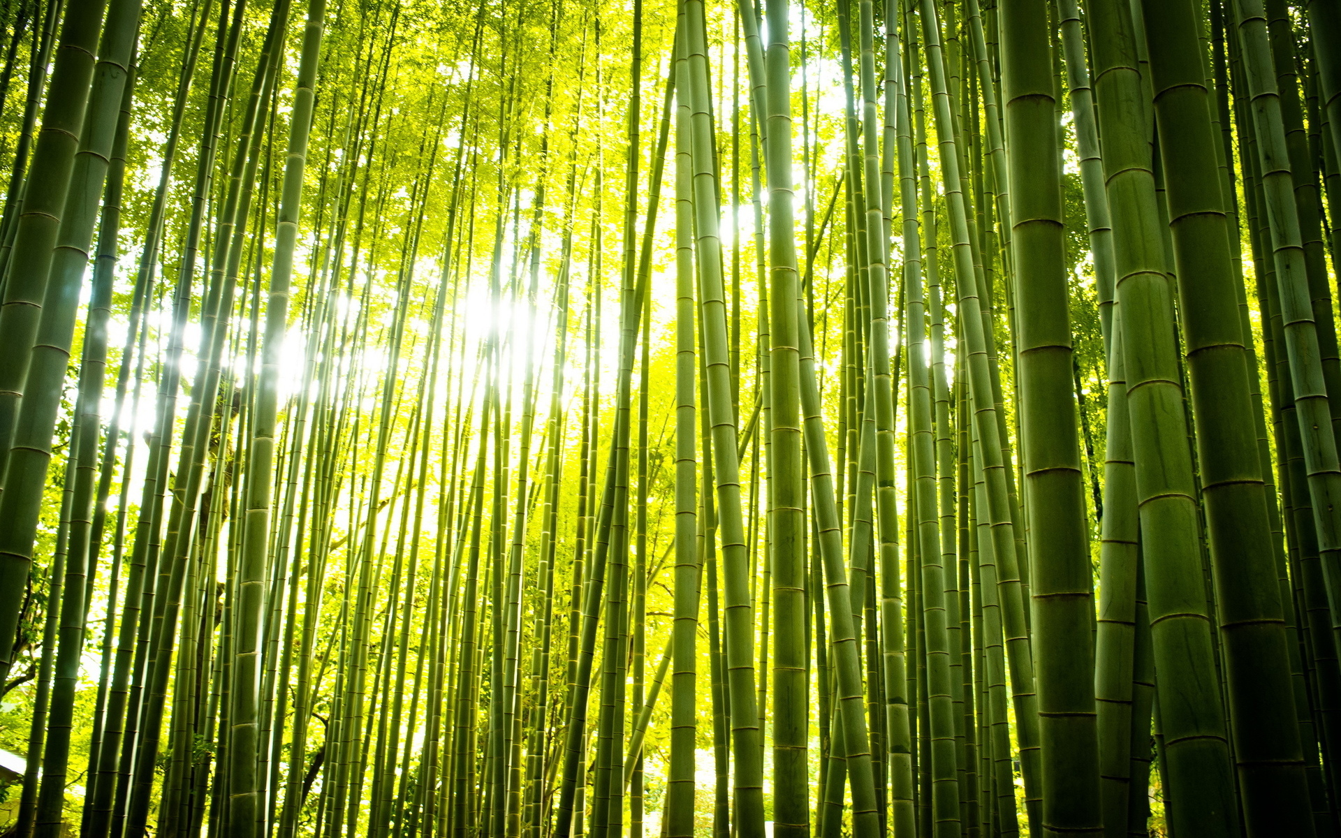 Bamboo full hd fond d 39 cran and arri re plan 1920x1200 for Fond ecran hd zen