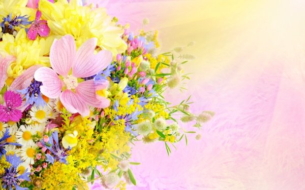 Artistique Fleur Fleurs Pastel Fond d'écran HD | Image