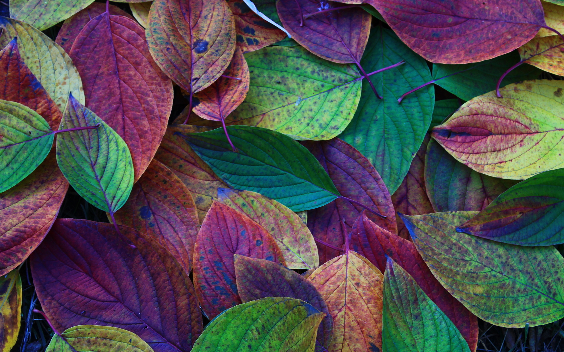 Leaf HD Wallpaper