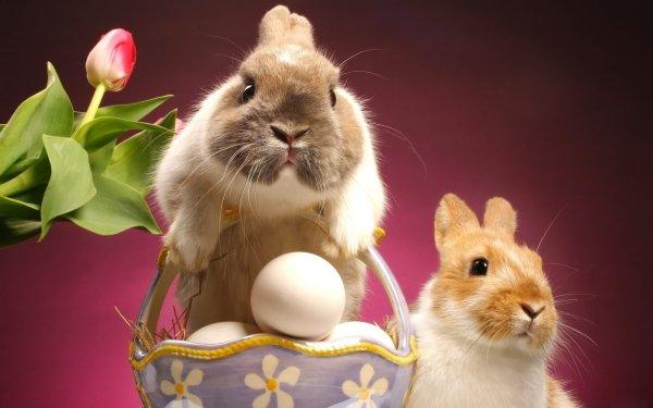 Animal Rabbit Easter Cute Egg HD Wallpaper | Background Image
