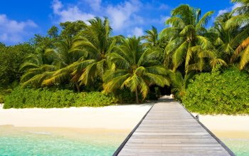 Photography - Tropical Wallpapers and Backgrounds ID : 319233