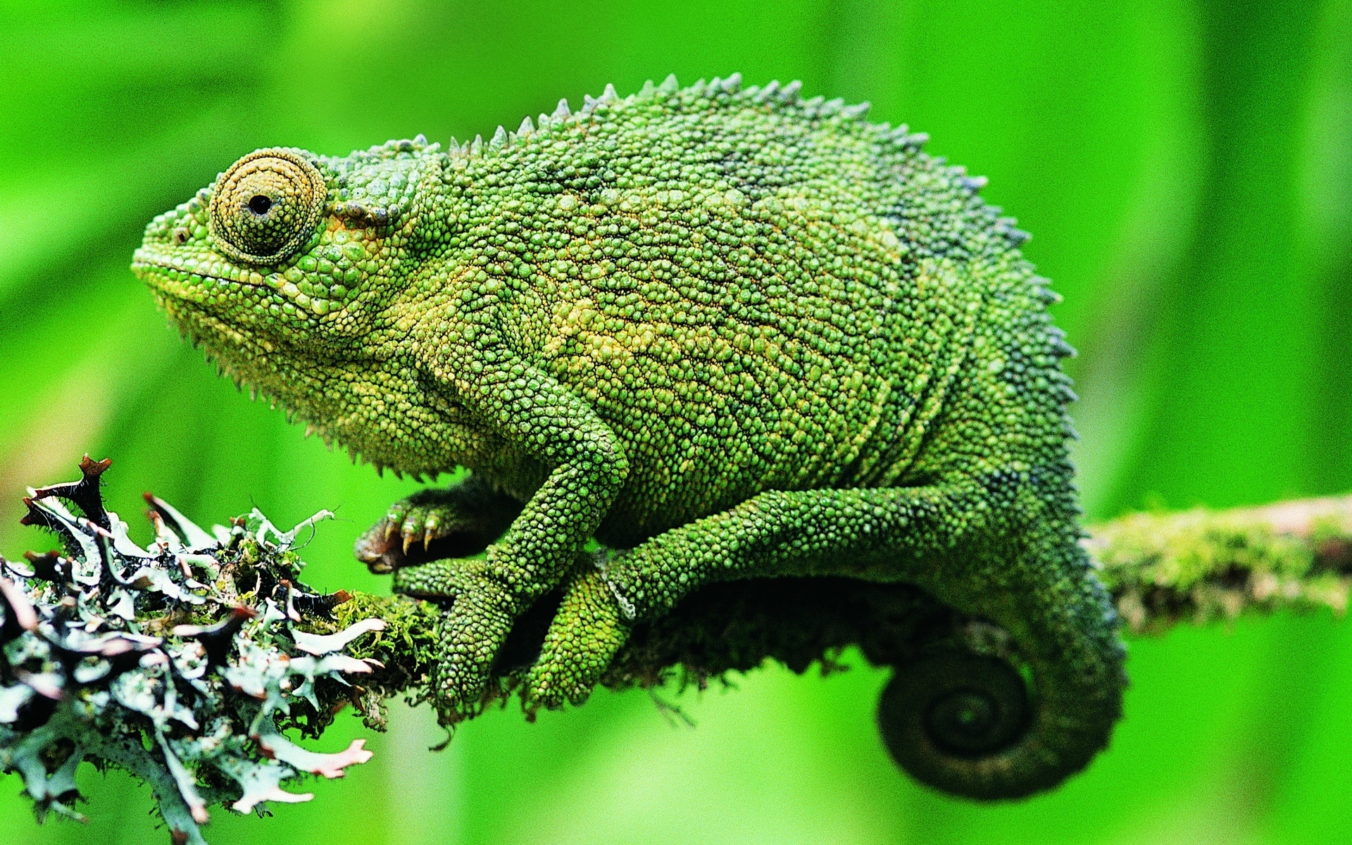 22 reptile hd wallpapers - photo #15
