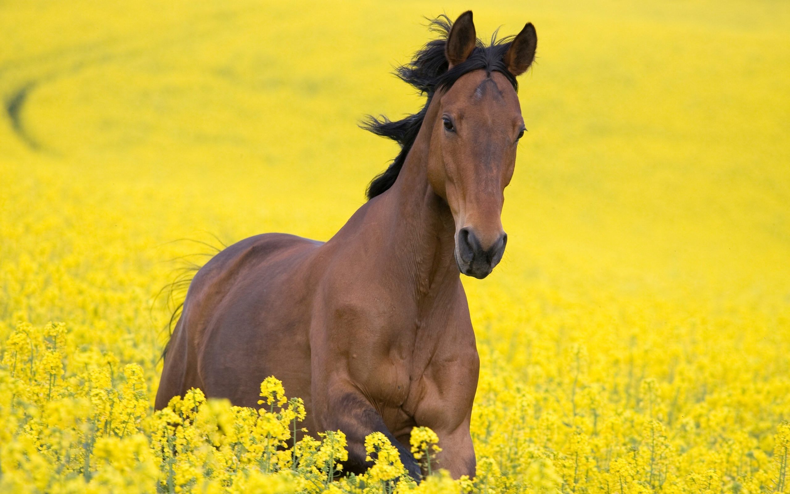 horses and flowers wallpaper - photo #16