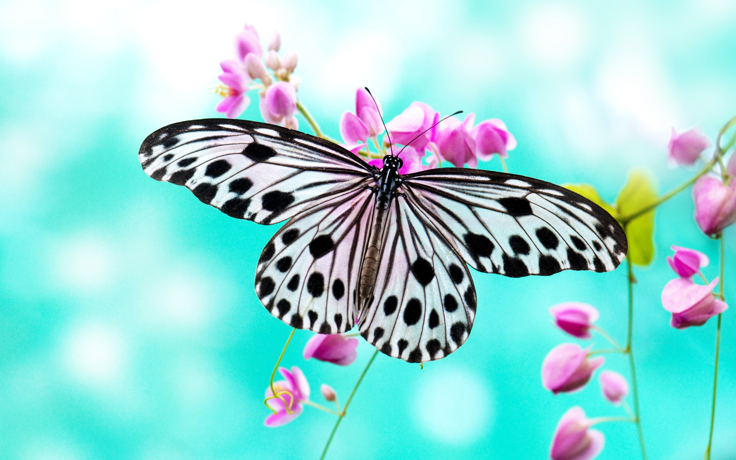 1459 butterfly hd wallpapers | background images - wallpaper abyss