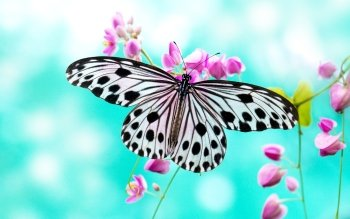 Animal - Butterfly Wallpapers and Backgrounds ID : 324873