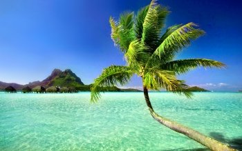 Photography - Tropical Wallpapers and Backgrounds ID : 325886