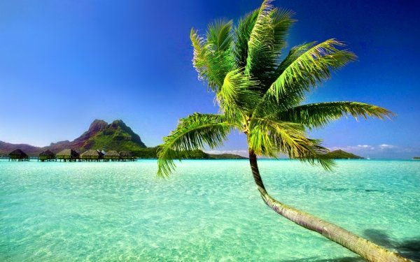 Photography Tropical Horizon Palm Tree Pacific Sea Summer HD Wallpaper | Background Image