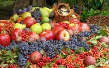 Alimento - Fruit Wallpapers and Backgrounds ID : 326822