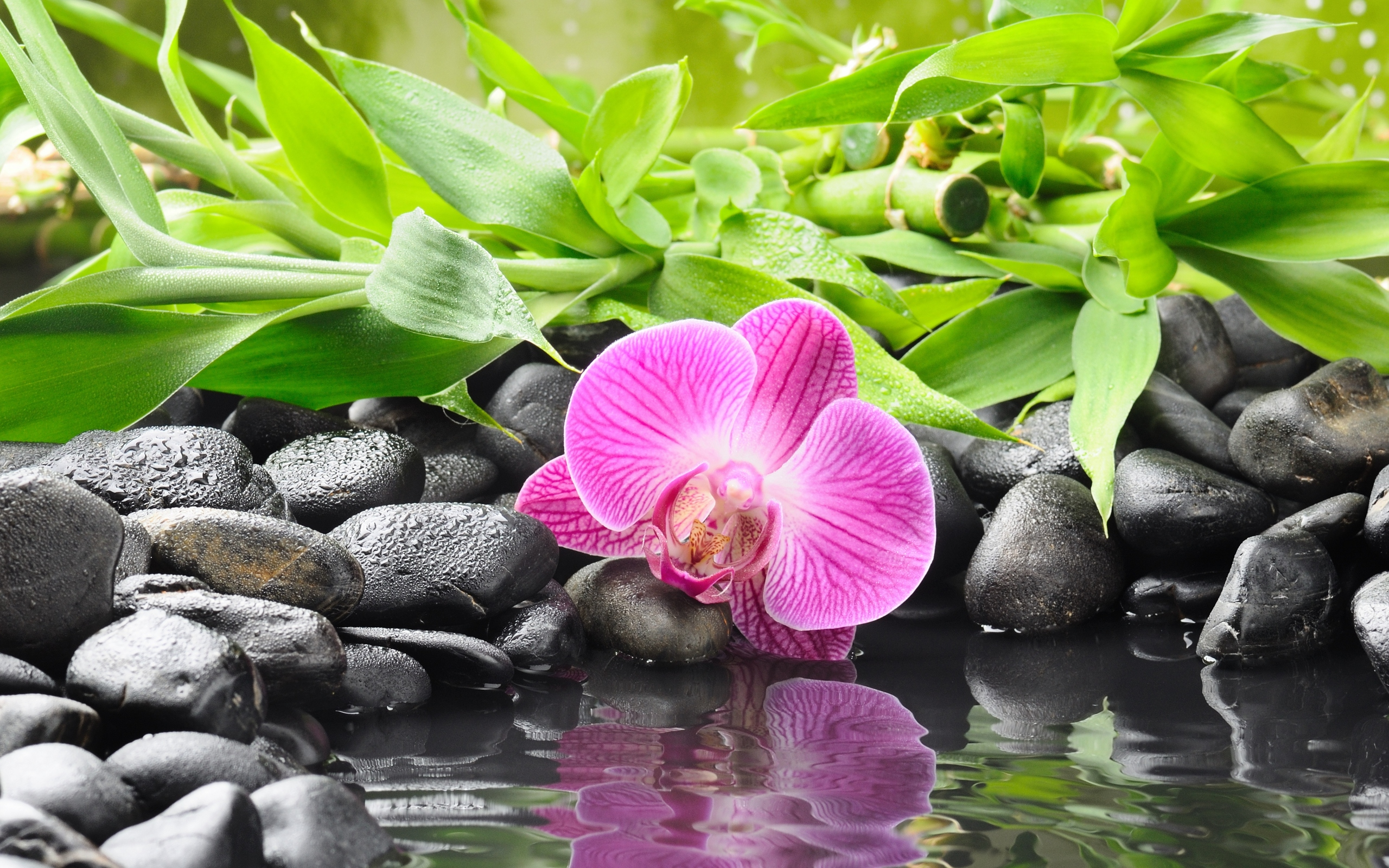 Zen full hd wallpaper and background 2560x1600 id 327485 - Decoration zen et nature ...
