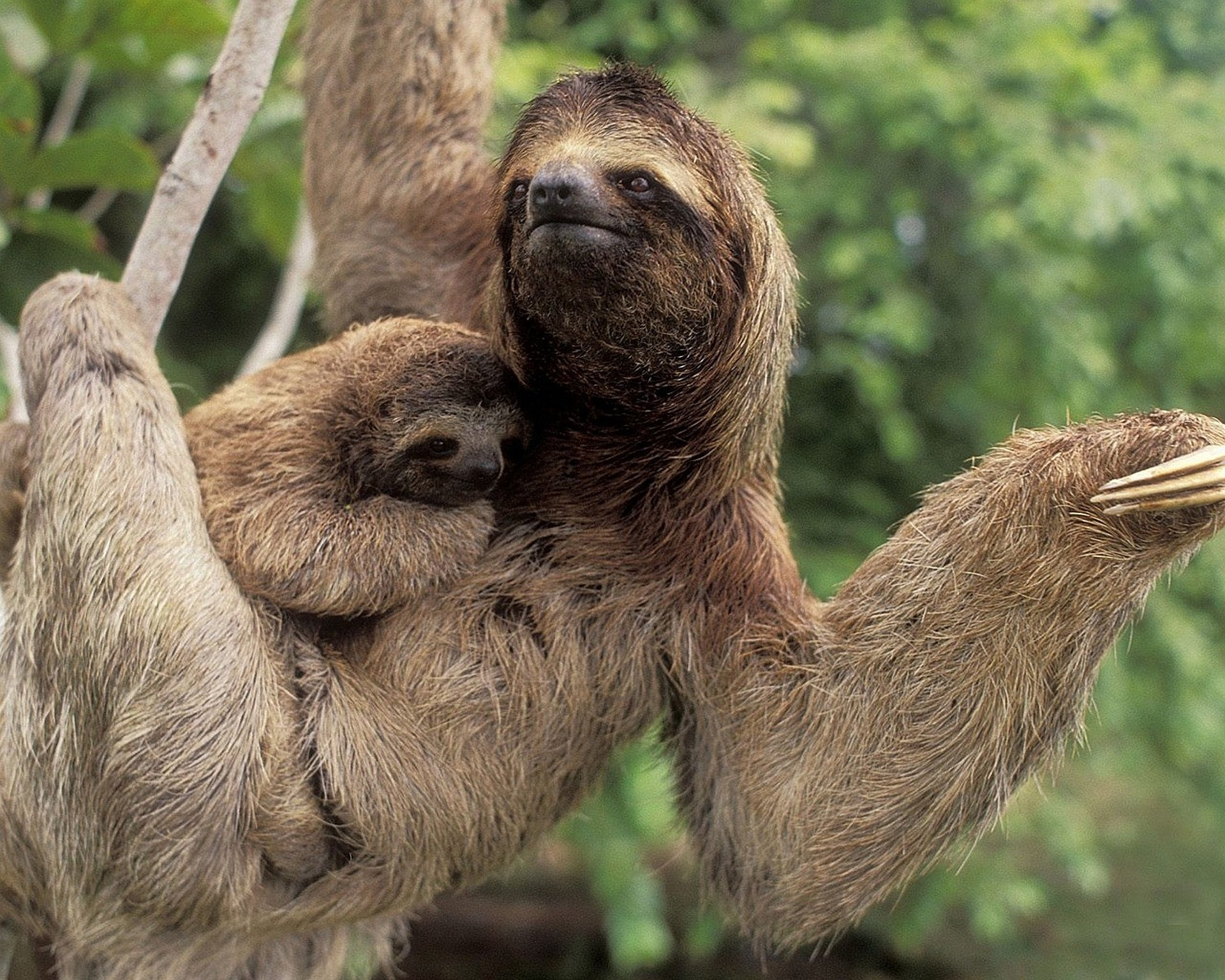 Image result for sloth wallpaper