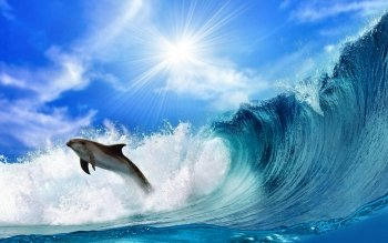 Animal - Dolphin Wallpapers and Backgrounds ID : 328209