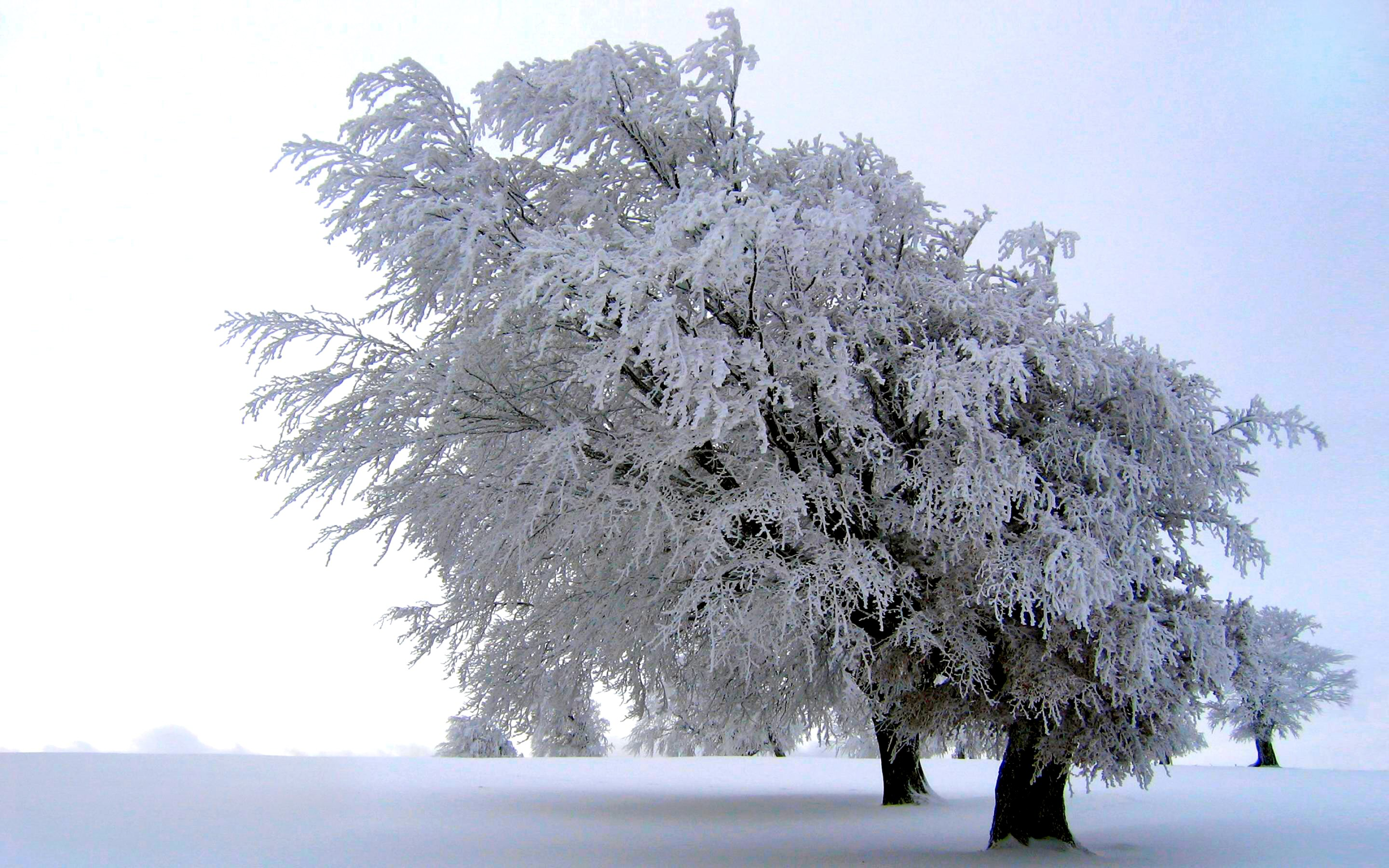 pin snow wallpapers trees - photo #25