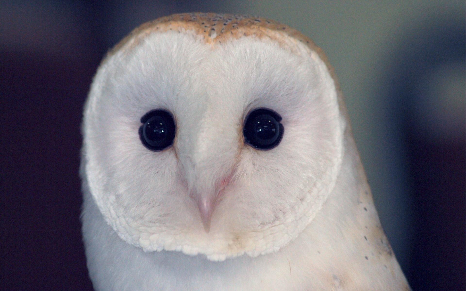 Owl Sunset Computer Wallpaper