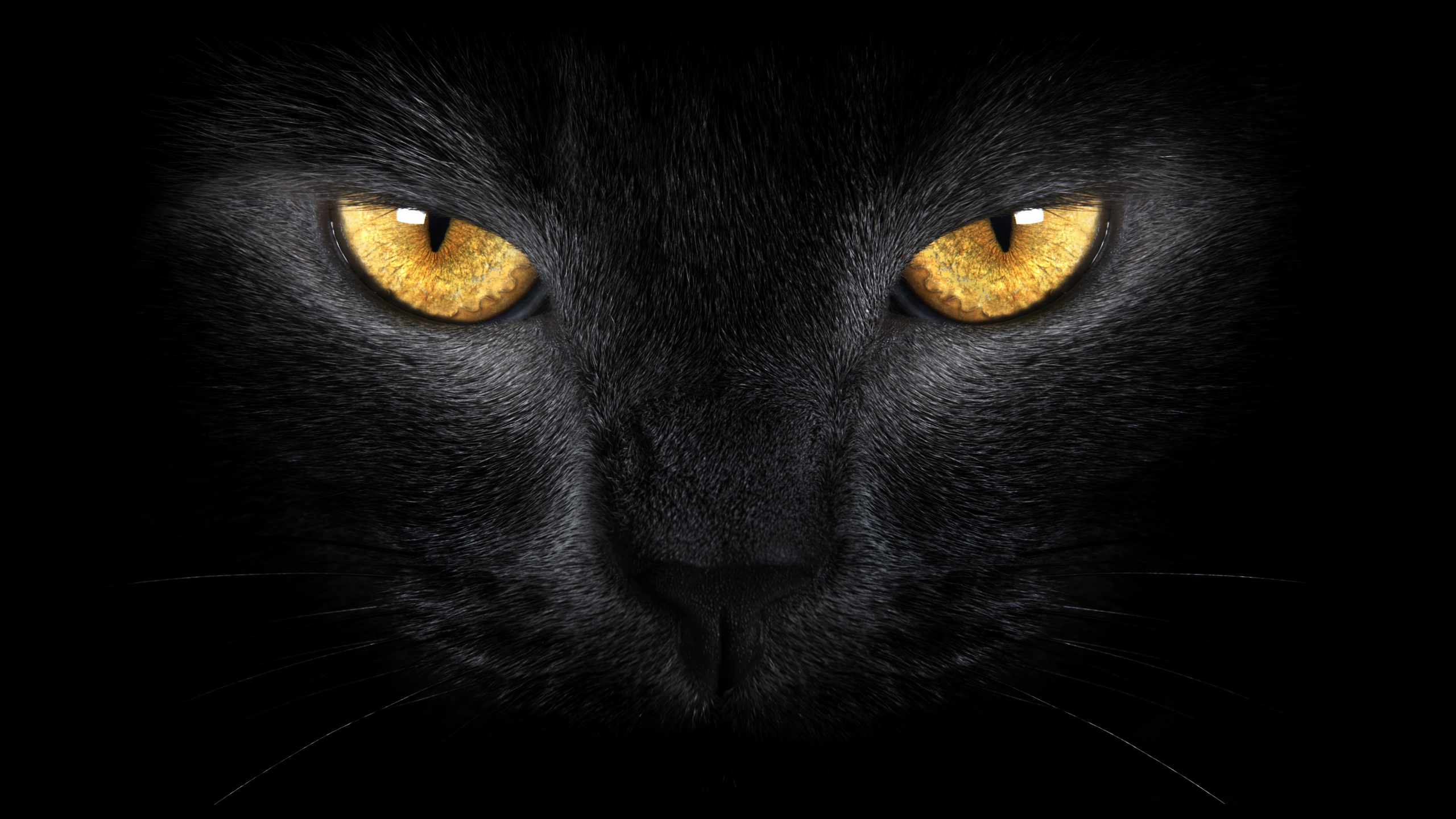 7104 cat hd wallpapers | background images - wallpaper abyss - page 2