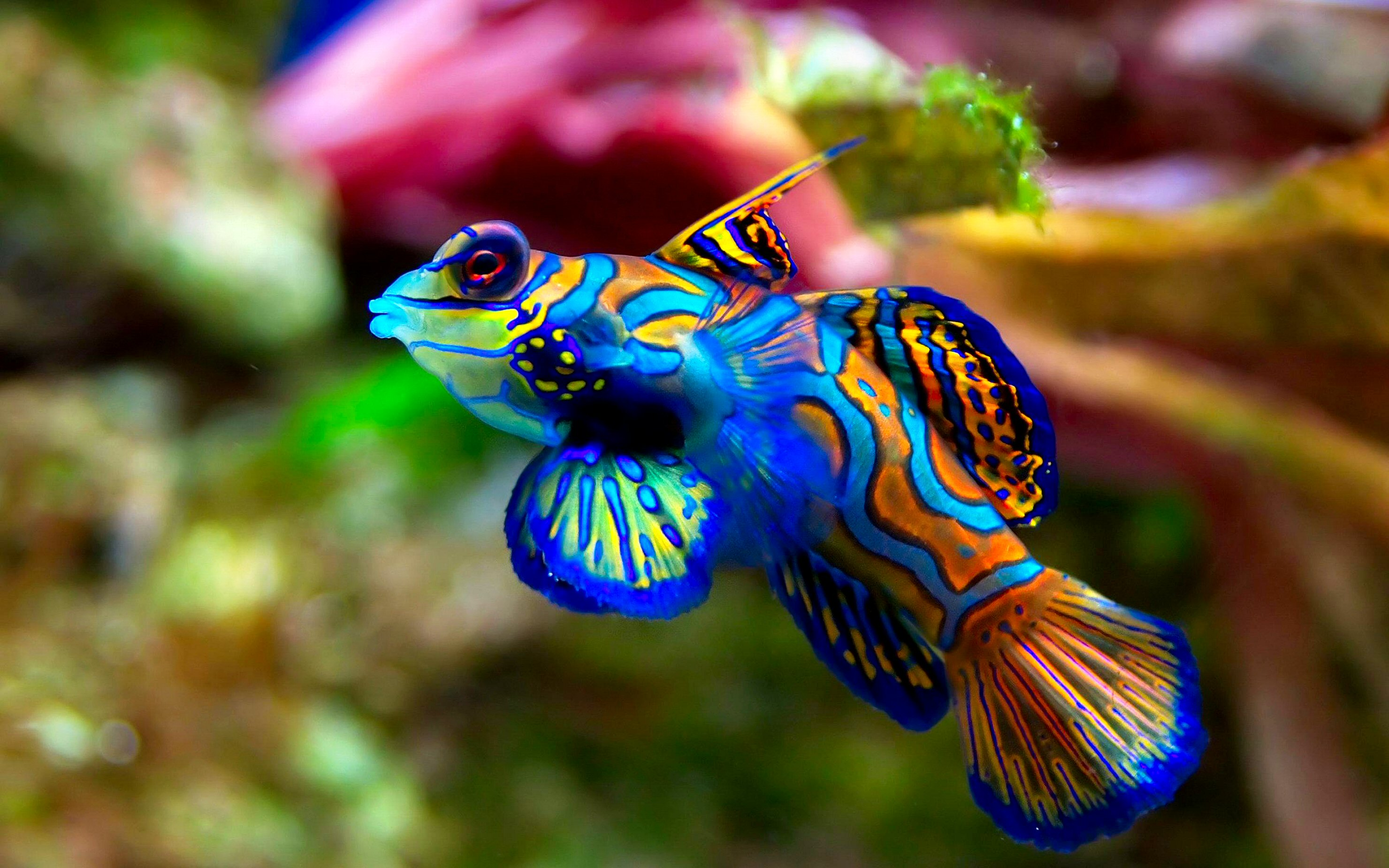 Fish Wallpaper HD Wallpaper Background ID