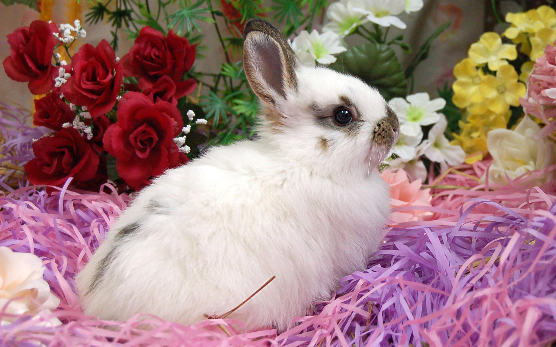 Moril-Easter Bunny HD Wallpaper