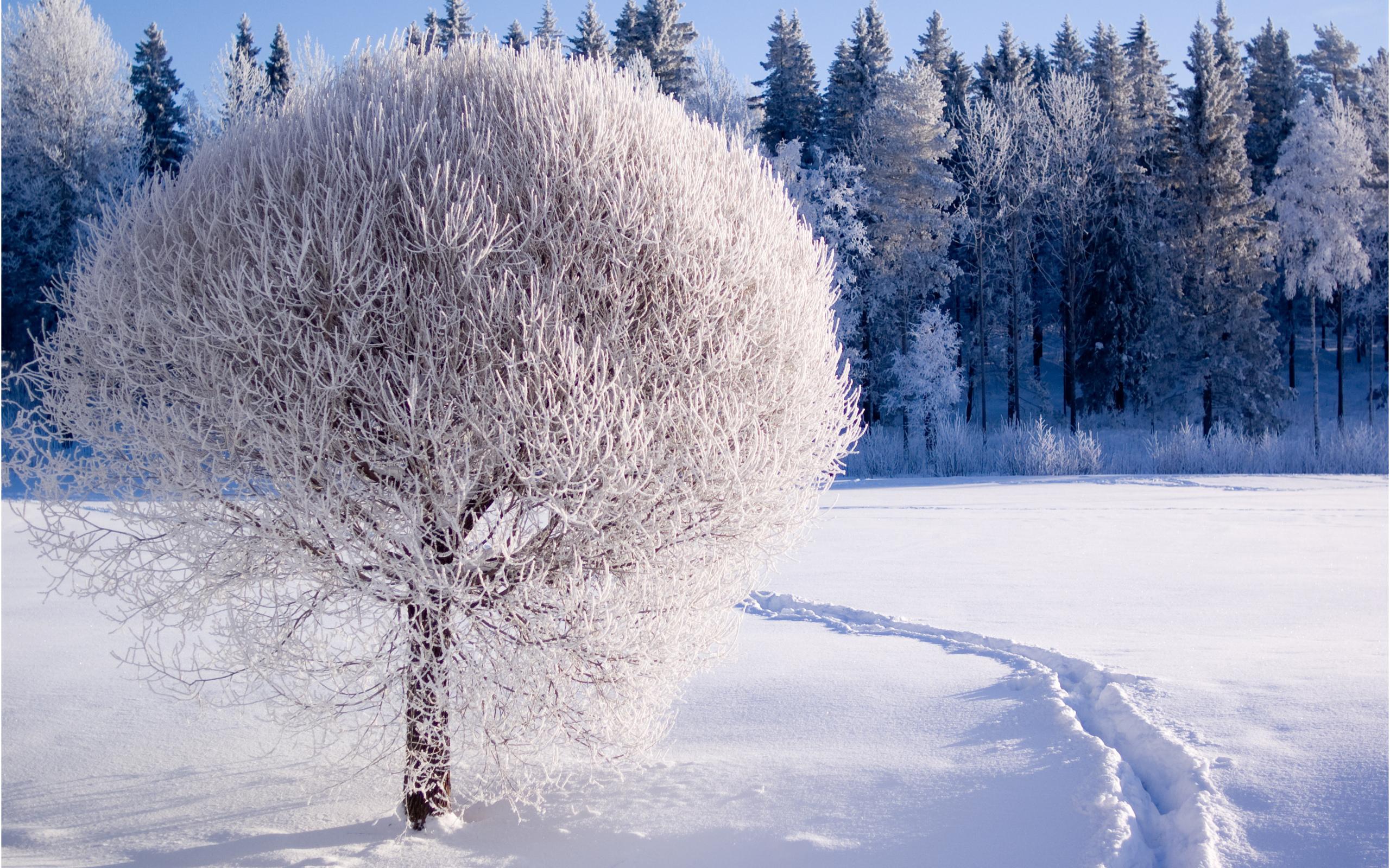 2560x1600 Earth Winter Winter