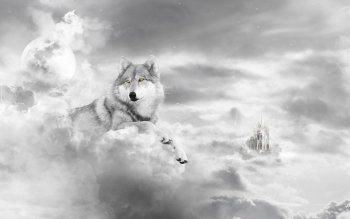 Dierenrijk - Wolf Wallpapers and Backgrounds ID : 335782