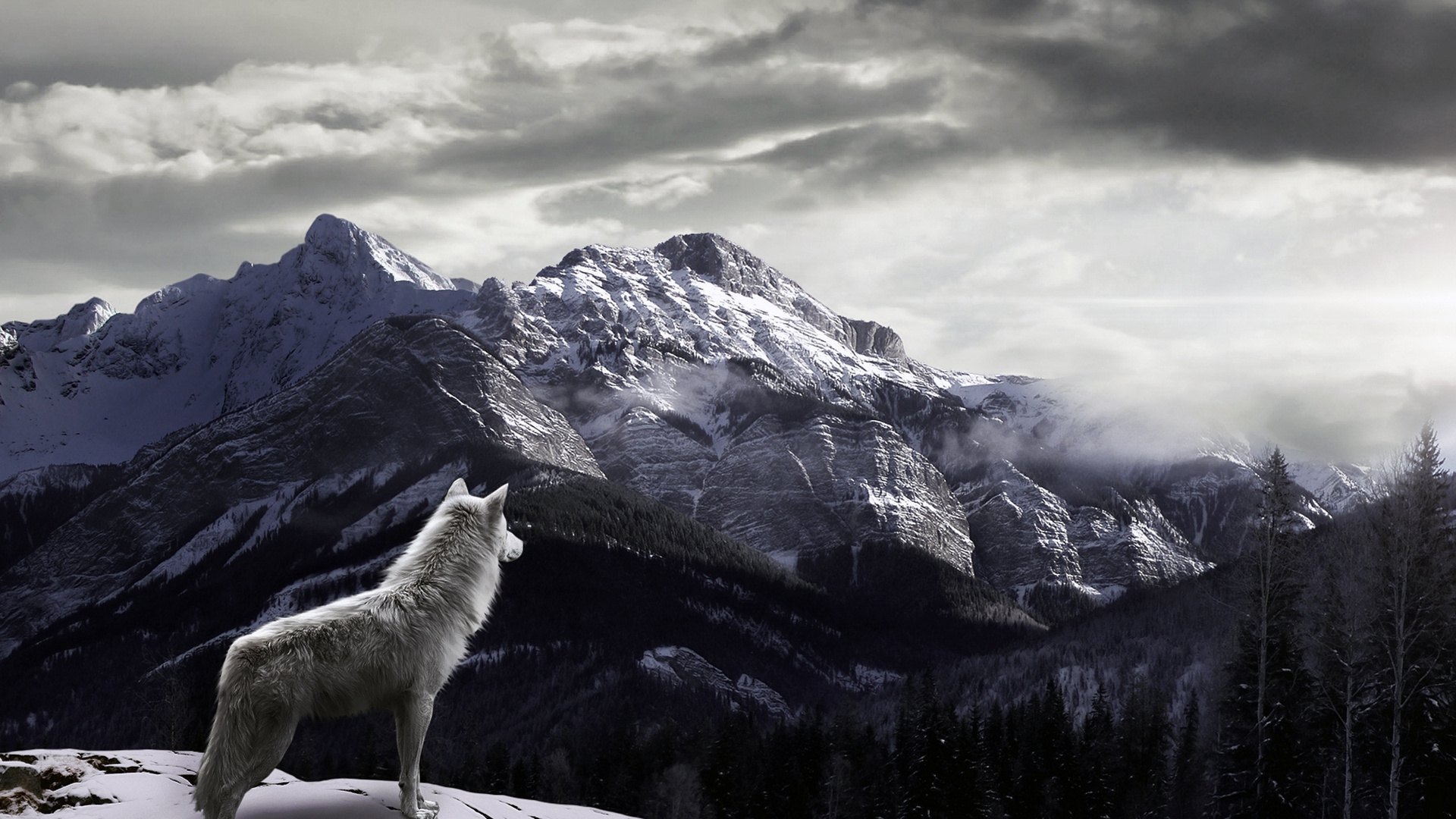 Wolf HD Desktop Wallpapers