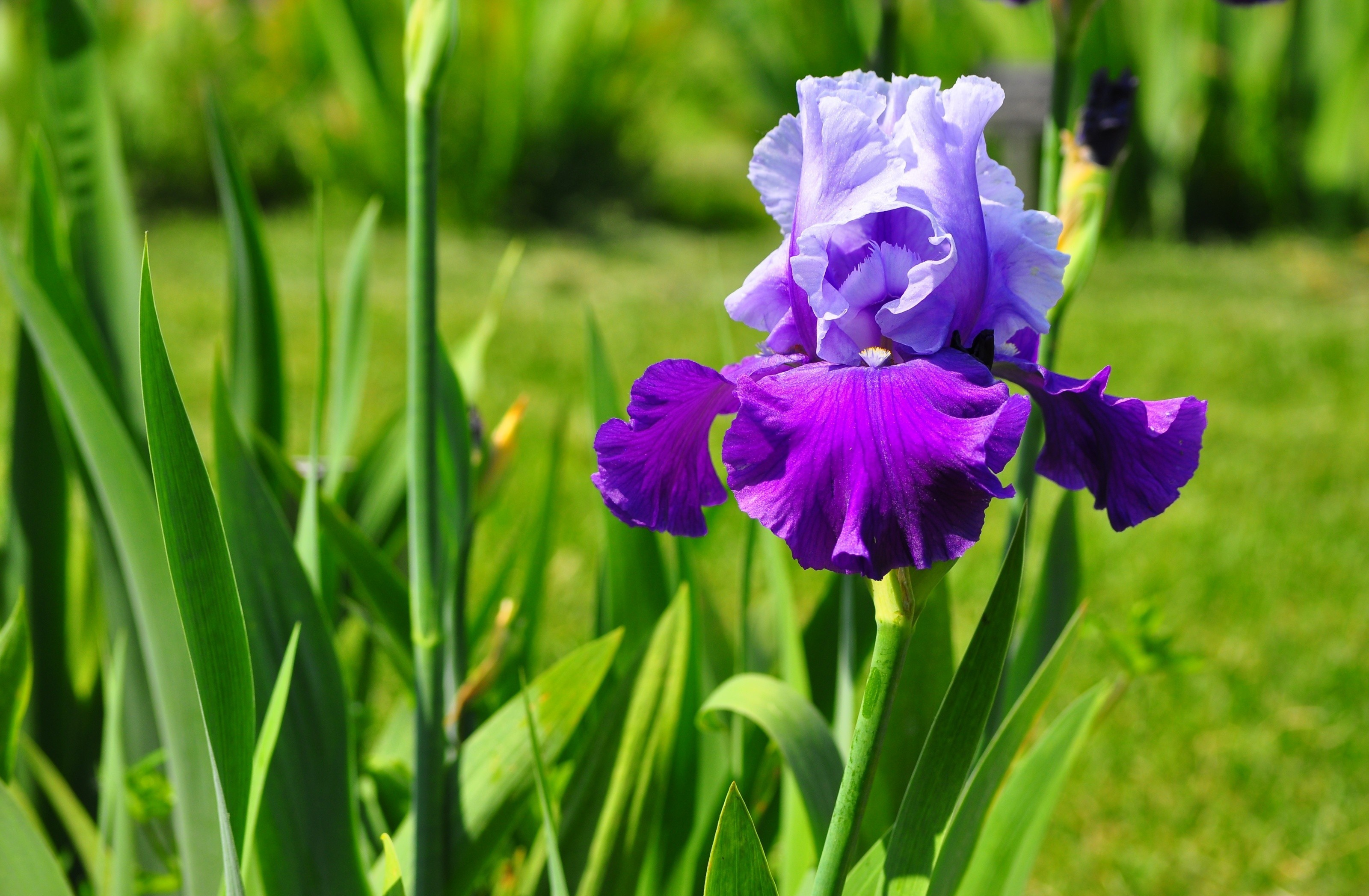 56 iris hd wallpapers background images wallpaper abyss hd wallpaper background image id337119 izmirmasajfo