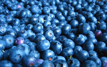 Alimento - Blueberry Wallpapers and Backgrounds ID : 337334
