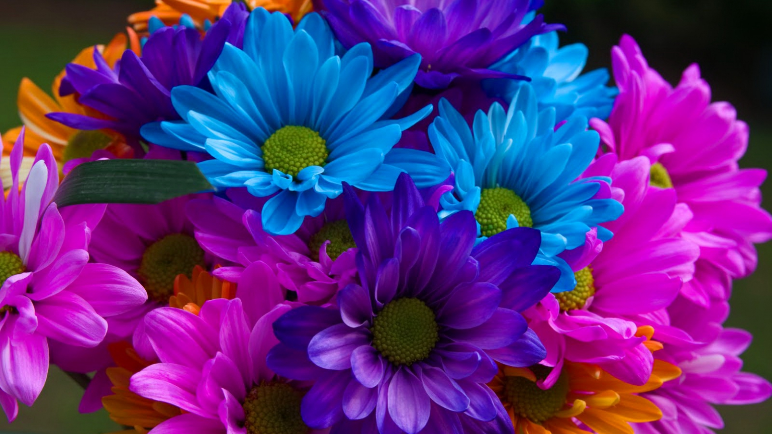 Free Colorful Flower Desktop Wallpaper: A Wild Bloom Wallpaper And Background Image
