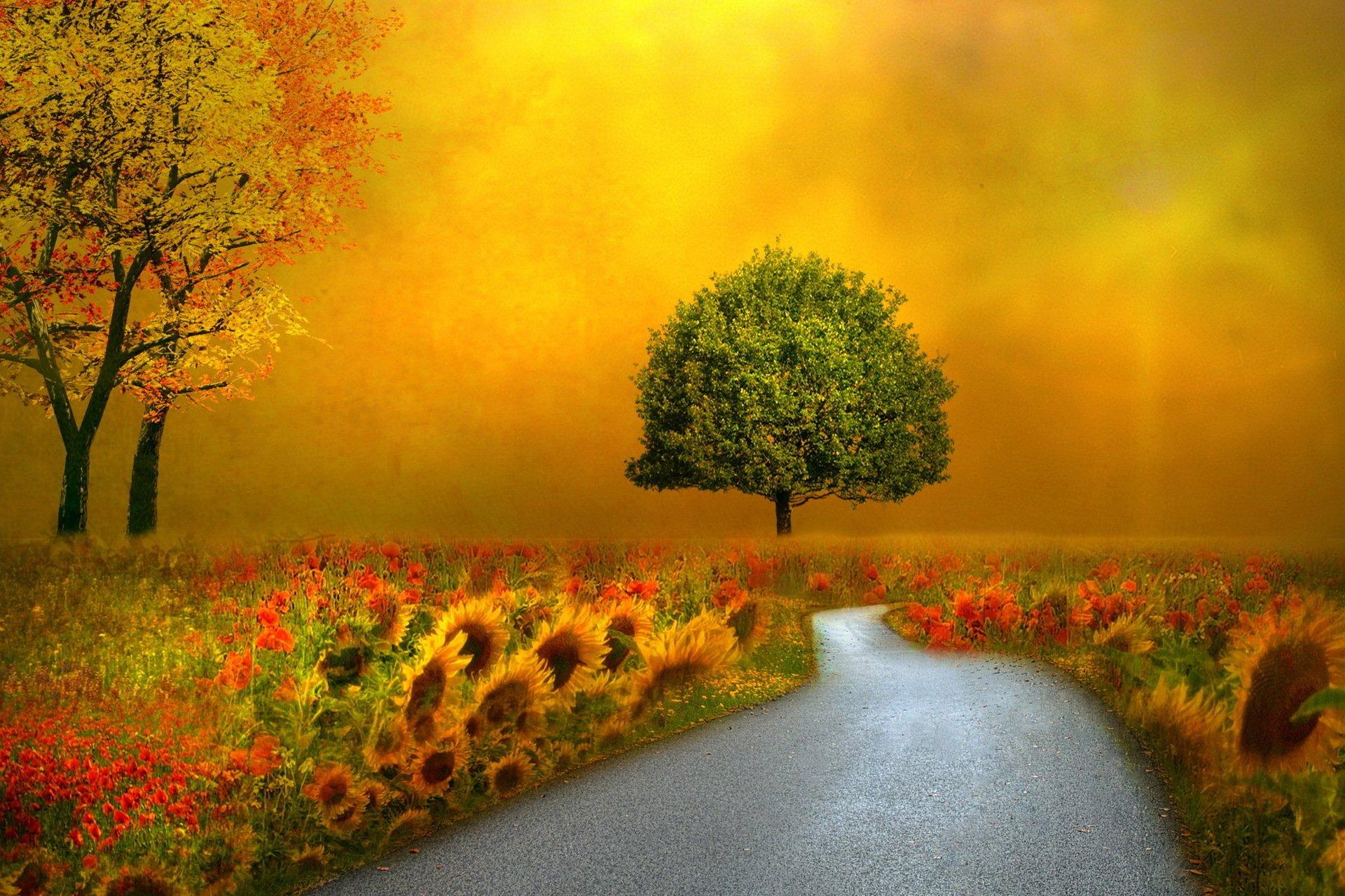 Artistic - Tree  Artistic Fantasy Road Flower Sunset Field Wallpaper