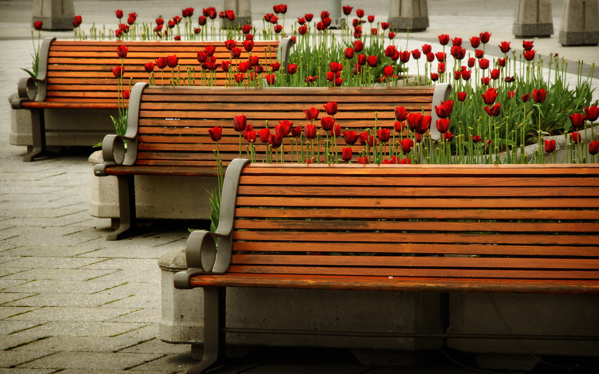 Bench HD Wallpaper