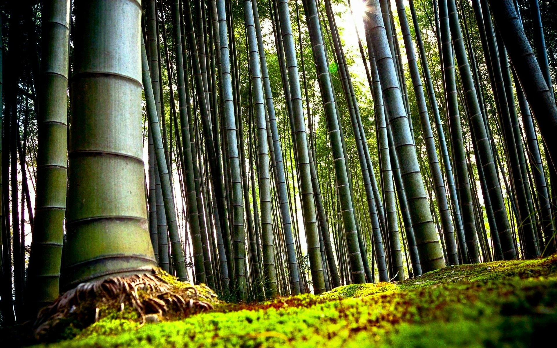 97 Bamboo Hd Wallpapers Background Images Wallpaper Abyss