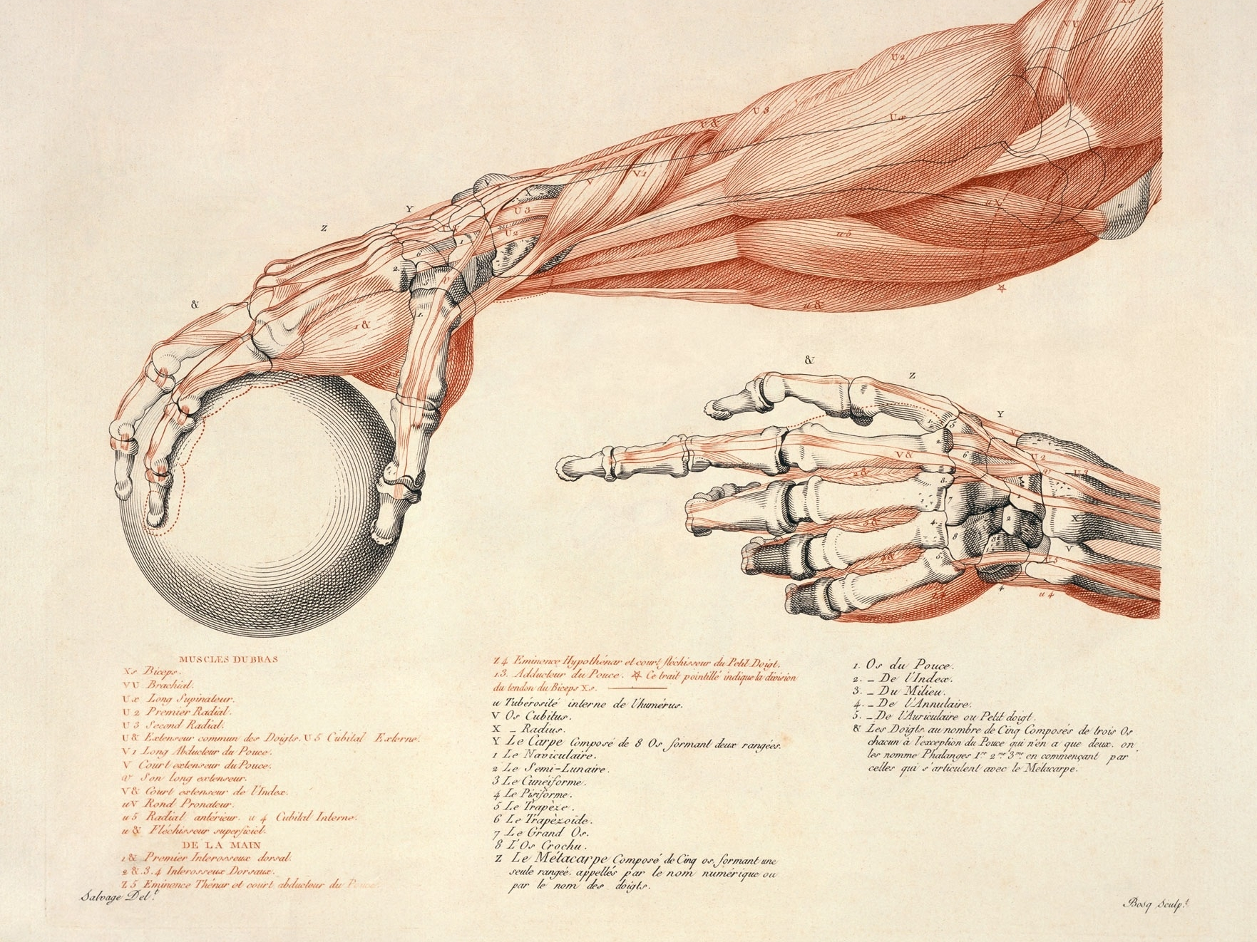Anatomy Wallpaper and Background Image | 1763x1322 | ID ...
