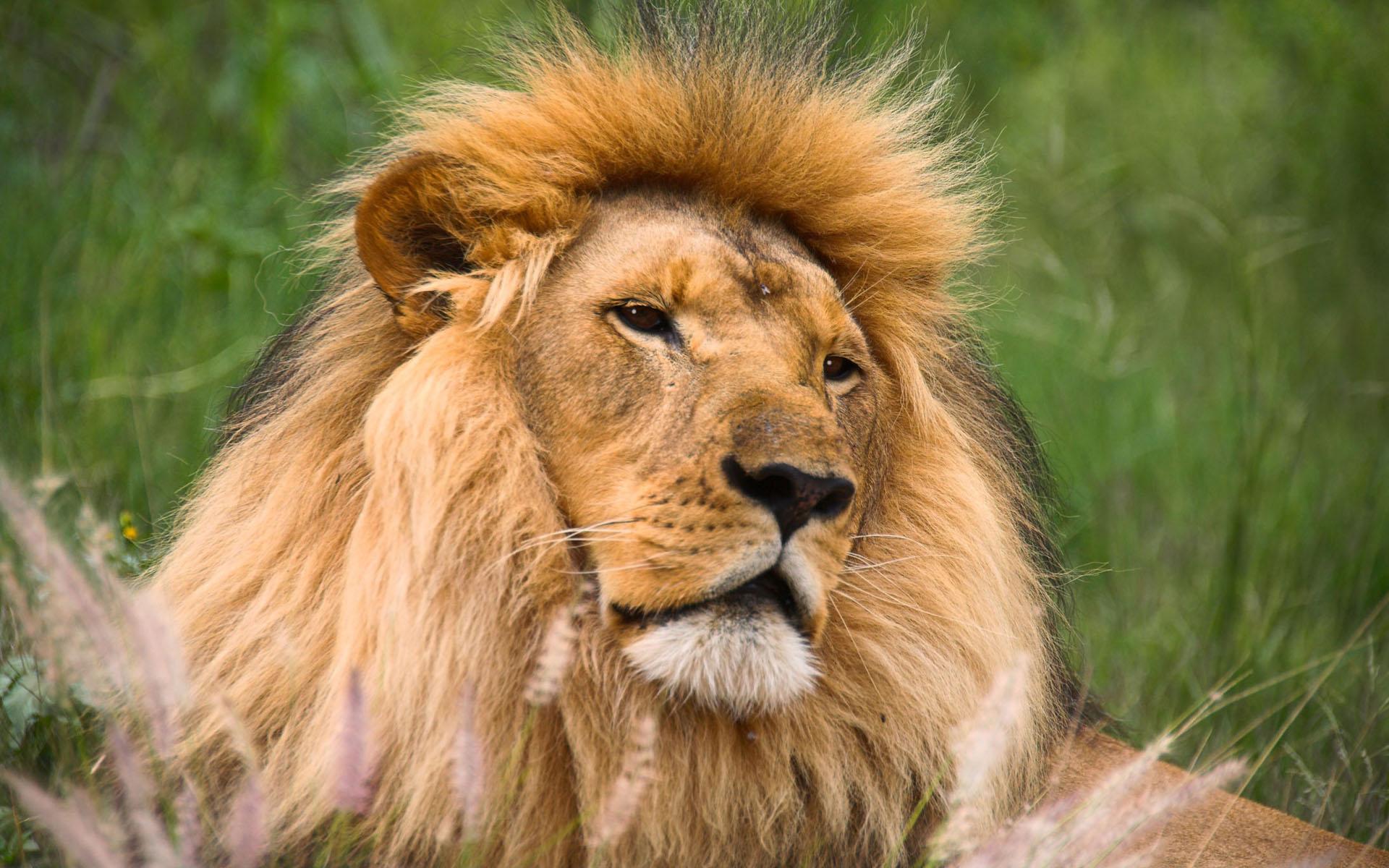 Fotos De Animales Salvajes Para Fondo De Pantalla: Fondos De Pantalla Animales Salvajes Imagui