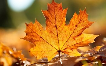 Earth - Leaf Wallpapers and Backgrounds ID : 344079